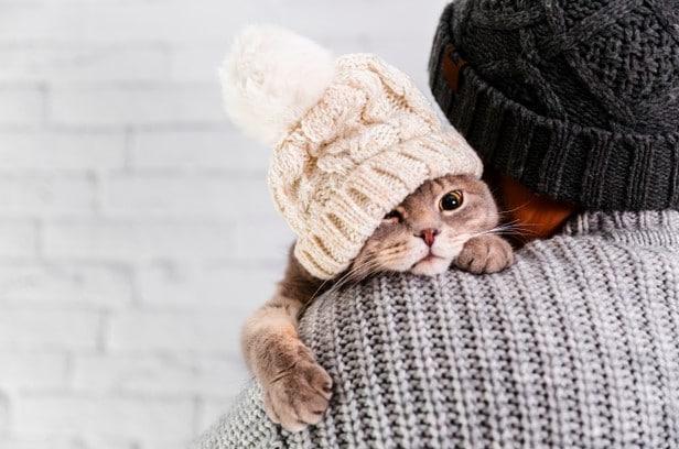 anak kucing anggora