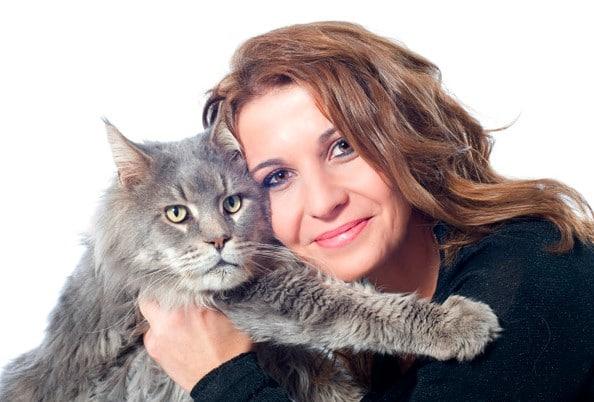 karakter kucing anggora