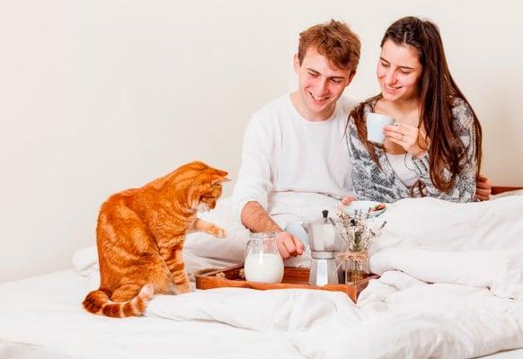 cara merawat kucing persia yang benar