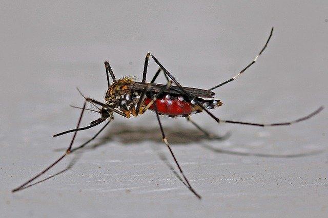 aplikasi pengusir nyamuk
