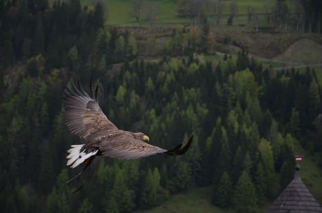 uniknya elang