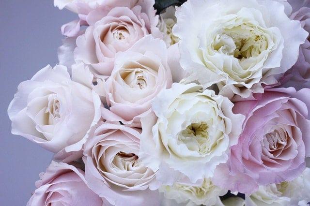 bunga putih