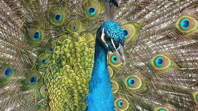 hewan langka yang ada di indonesia